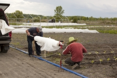 Installation de filets contre les insectes ravageurs