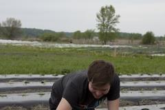 Un ami qui aide à la plantation des concombres