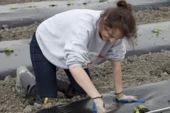 Une amie qui aide à la plantation des concombres