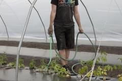 Philippe arrosant les plants de tomates fraîchement mis en terre